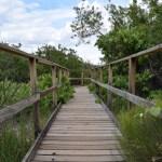 Walking path12