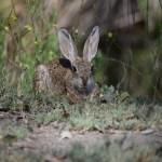 Bunny on watch12