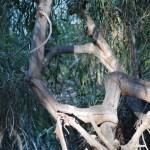 Hexagonal tree branches12