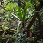 Rainforest theme12
