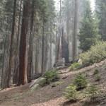 Burned and broken tree12