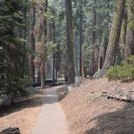 Congress trail in Sequoia12
