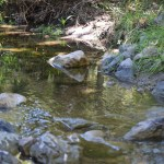 Little creek with rocks12