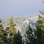 Sunny hillside in Sequoia12