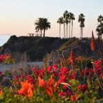 Flowers with blurry coast background12