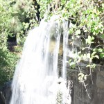 Waterfall with trees12
