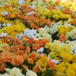 Flowerbed12