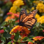 Monarch Butterfly from lower angle12