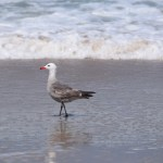 Seagull in the ocean12