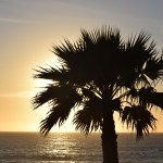 Sun setting behind a palm tree12