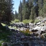 rocky-bushy-creekbed12