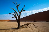 One of my favorite trees at Dead Vlei