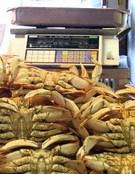 Crab01w