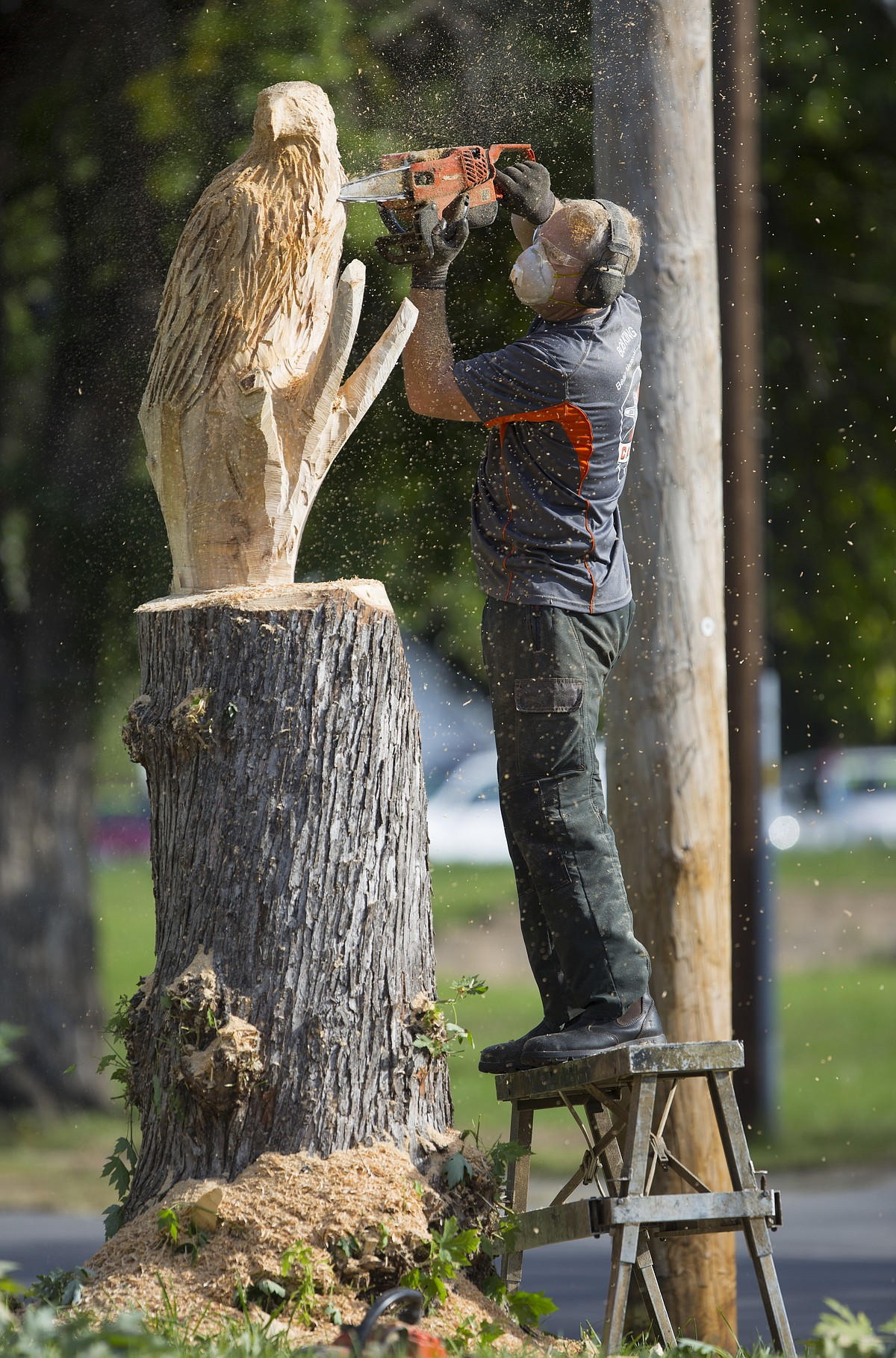 Chainsaw carver turns year old tree trunk into nest of