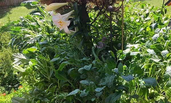 Blumen auf einem Permakulturbalkon