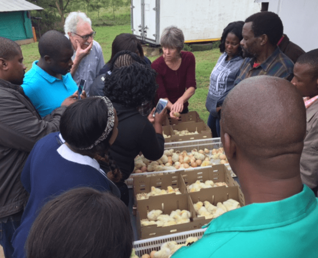 Poultry Project South Africa - World Poultry Foundation