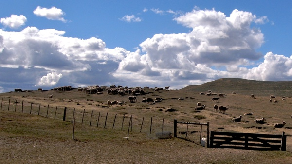 Grazing Tierra Del Fuego