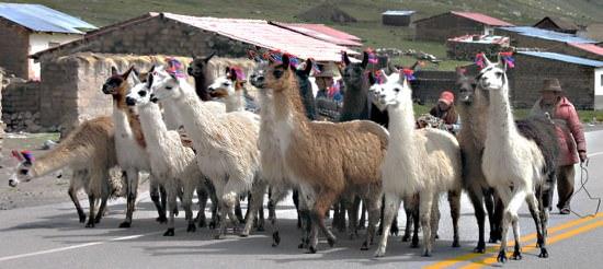 Llamas2
