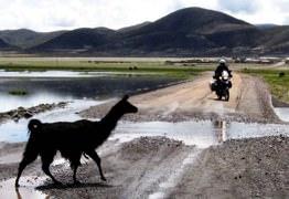 Miah Llama Water