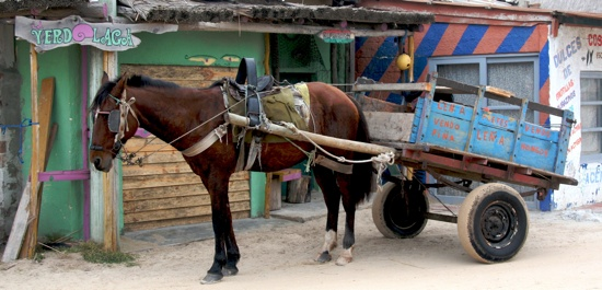 Punta Del Diablo Horse Cart