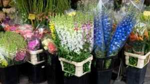 urban-flower-market-scholarship