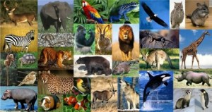 online-zoology-degree-programs