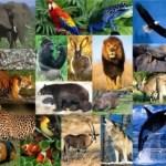 programas de grado-zoología en línea