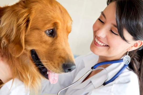 How can I get a Doctor of Veterinary Medicine - dvm degree