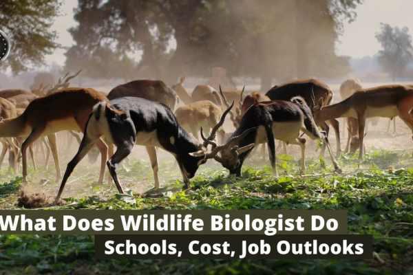 wildlife biologist