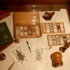What Is An Entomologist?