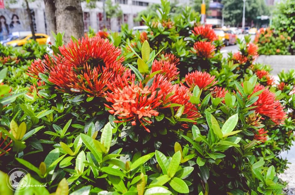 Taipei Day One_-8