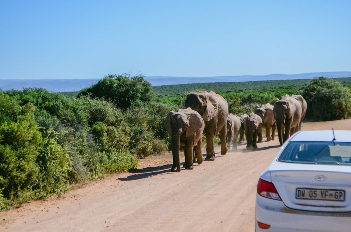 addo-elephant-park-32