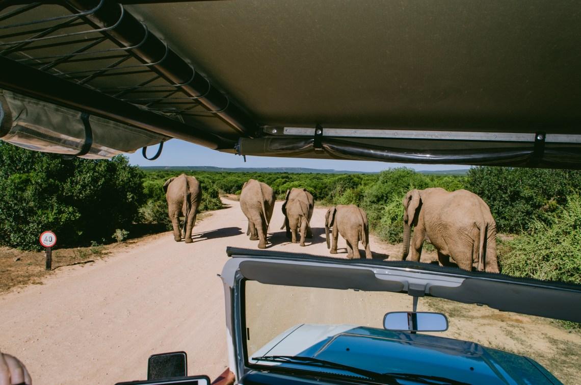 addo-elephant-park-36