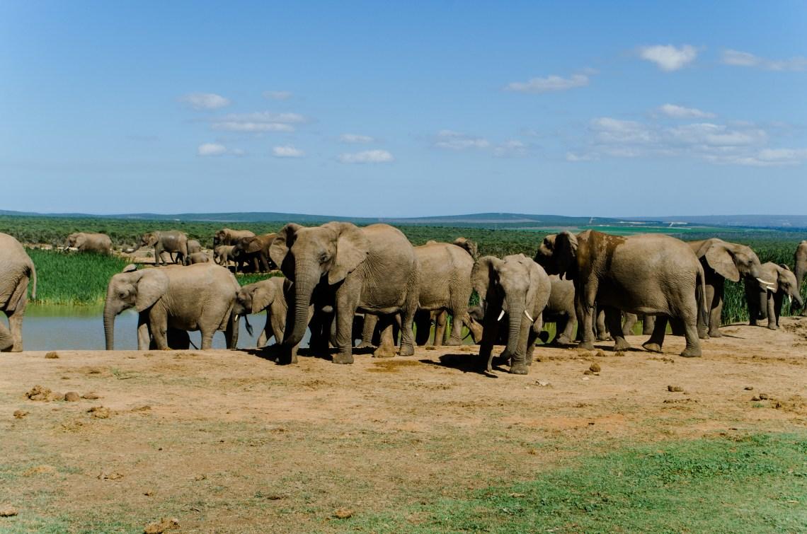 addo-elephant-park-9