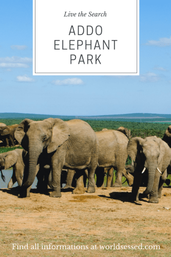 Addo Elephant Park South Africa