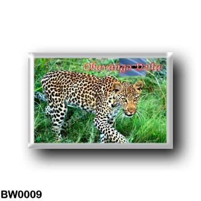 BW0009 Africa - Botswana - Okavango Delta Ghepard