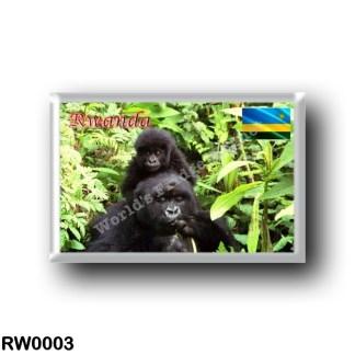 RW0003 Africa - Rwanda - Gorilla at National Park