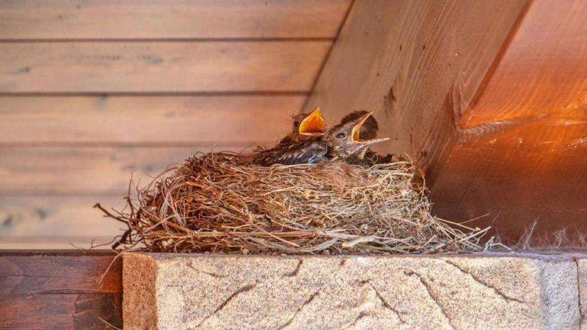 how-to-get-rid-of-birds-from-nesting-on-porch
