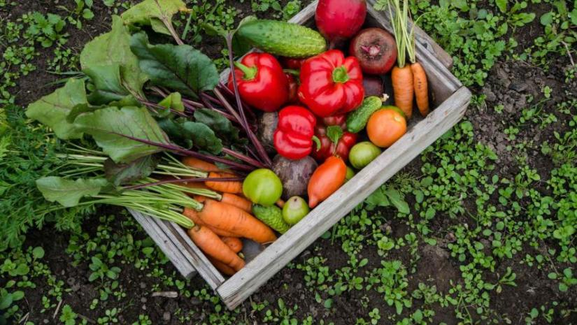 how-to-get-rid-of-grass-in-your-vegetable-garden
