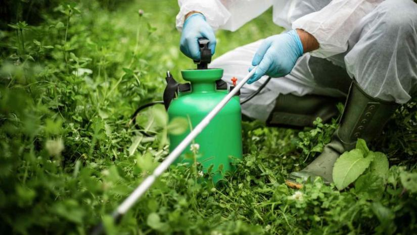 use-chemical-ingredients-to-wipe-out-the-grass