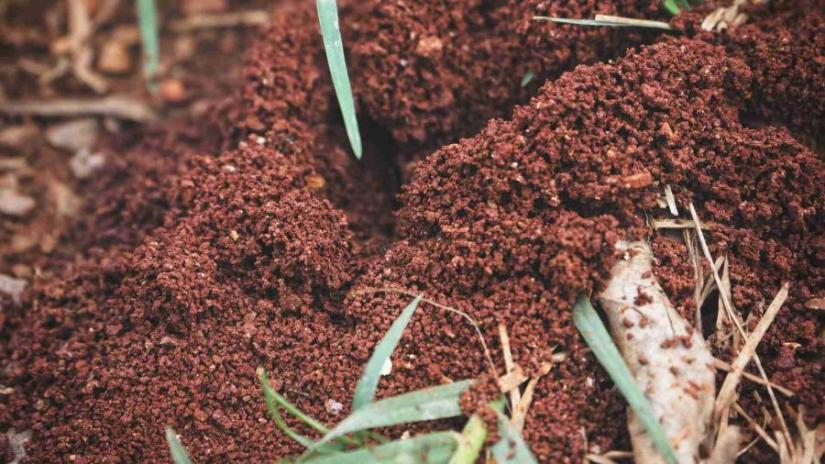ants-help-clean-your-vegetable-garden-from pests