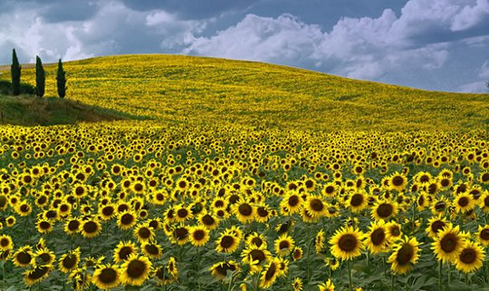 Top 15 Flower Fields in the World  World Top Top