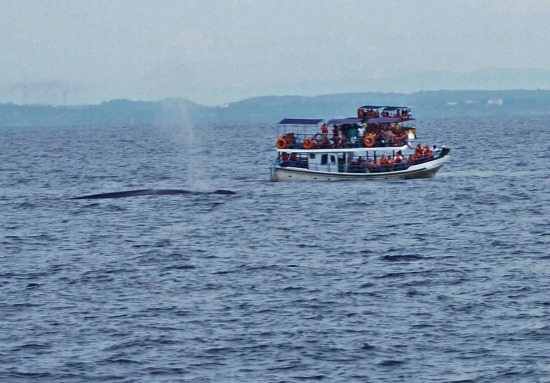 Best Places to Visit in Sri Lanka Whale watching Mirissa