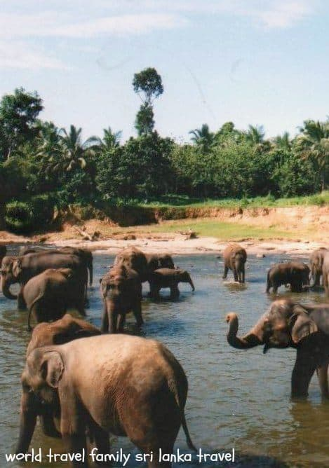 Sri Lanka Travel. Pinewalla elephant orphanage is a highlight of any Sri Lanka trip.