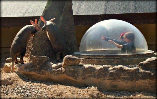 London Zoo meerkats for kids