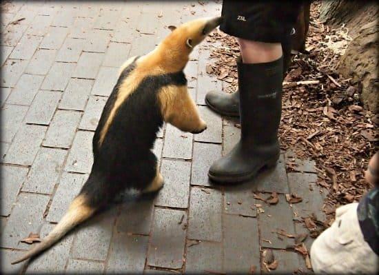 London Zoo Animal encounters
