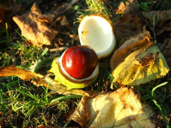 Conkers London on the cheap