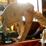 The Grant Museum of Zoology. A Great Free London Museum For Kids