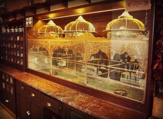 Finches at Armada Istanbul old city hotel.