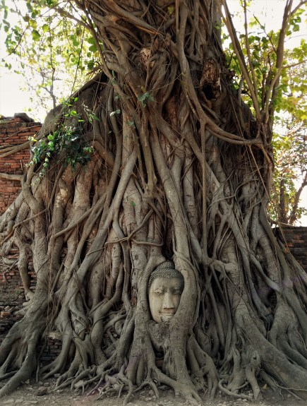 The famous Buddha in the tree